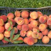 Peach Cobbler Cake